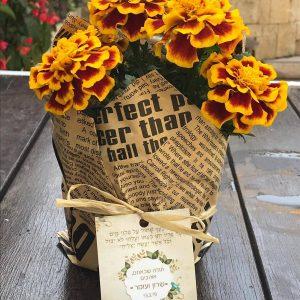עציצים עטופים באהבה - מתנות לאורחים בחתונה - נופך משלכם